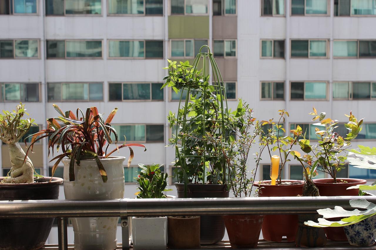 5 dicas de como cuidar do jardim