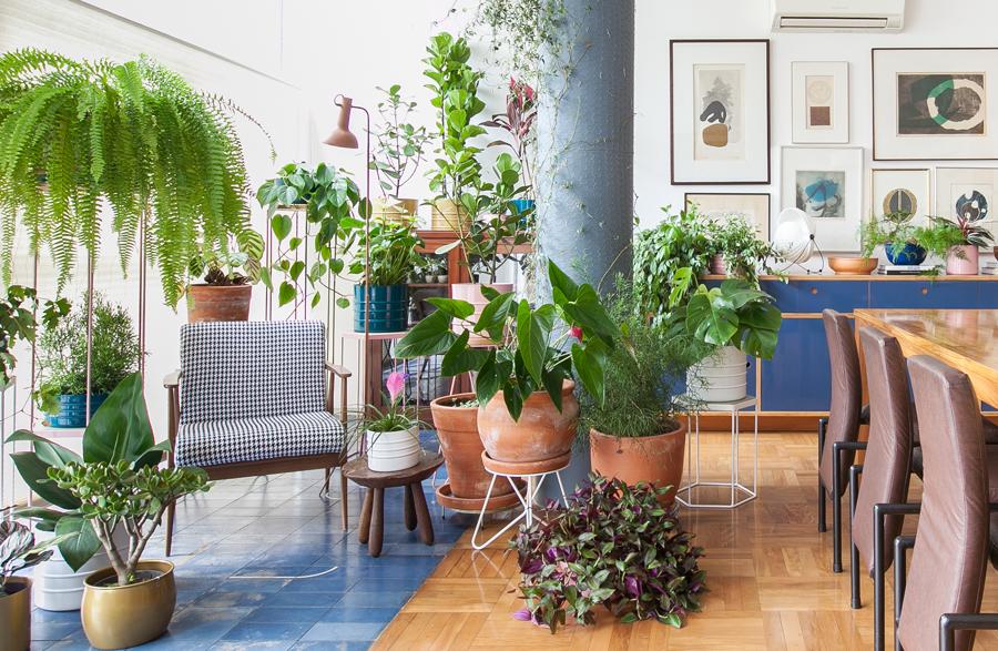 Dicas para cuidar de plantas