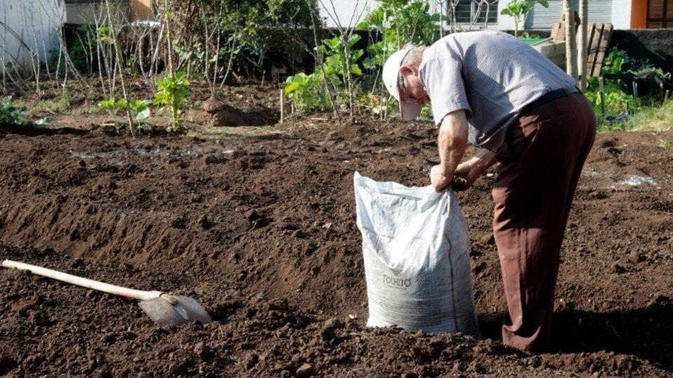 Horta comunitária ajuda idosos a superar depressão